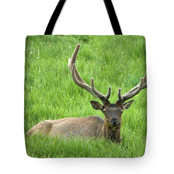 Tote Bag featuring the photograph Elk 6 by Gary Lengyel
