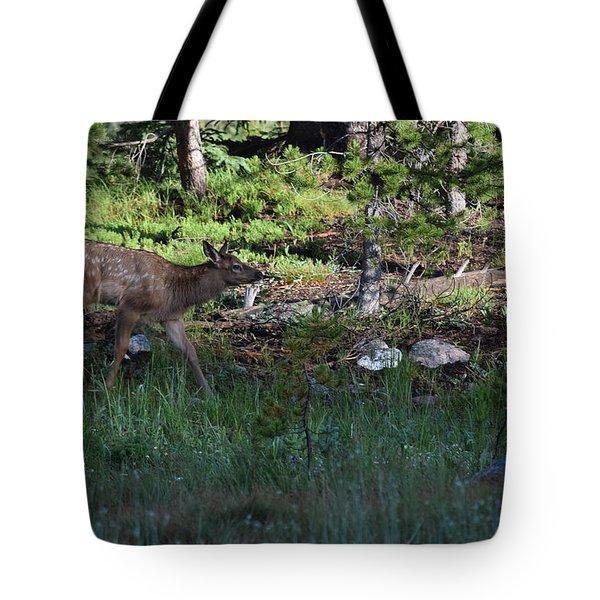 Baby Elk Rmnp Co Tote Bag