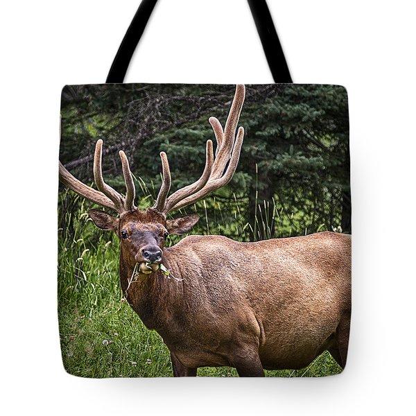 Elk Buck Tote Bag