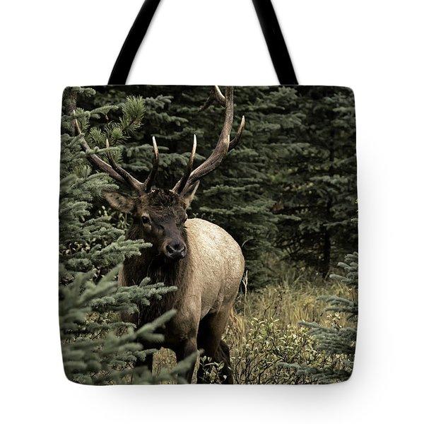 Elk Bull Tote Bag