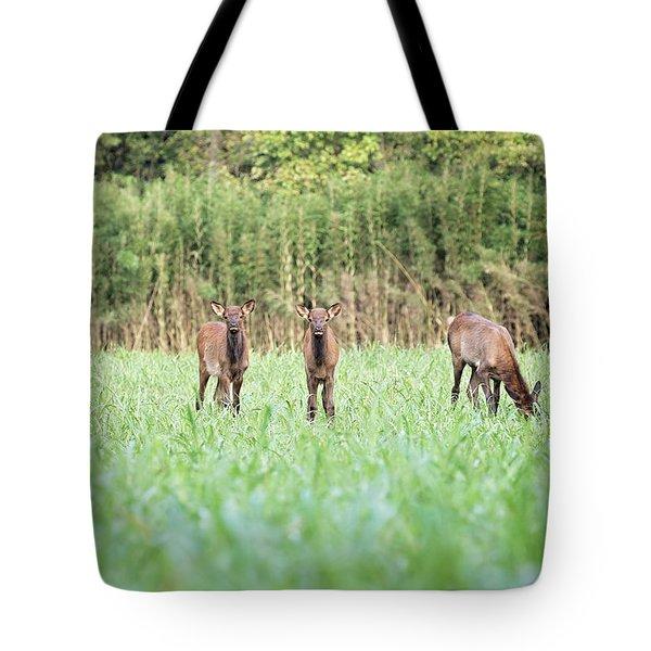 Elk Calves Tote Bag