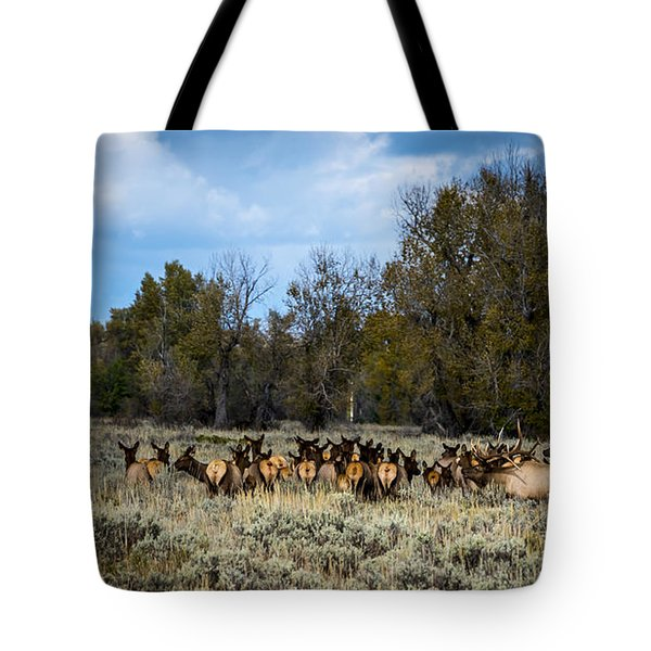 Elk Family Tote Bag by Sandy Molinaro
