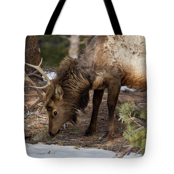 Elk Grazing In Rocky Mountain National Park Tote Bag