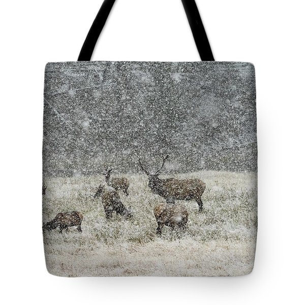 Elk Harem In Falling Snow Tote Bag