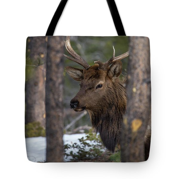 Elk In Rocky Mountain National Park Tote Bag
