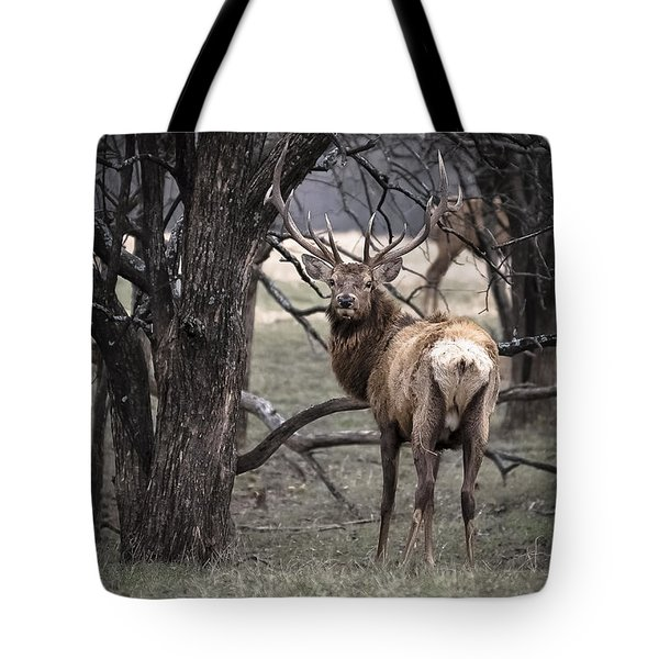 Elk In Timber Tote Bag