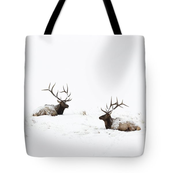 Elk Laying In A Snow Covered Meadow - 9069 Tote Bag