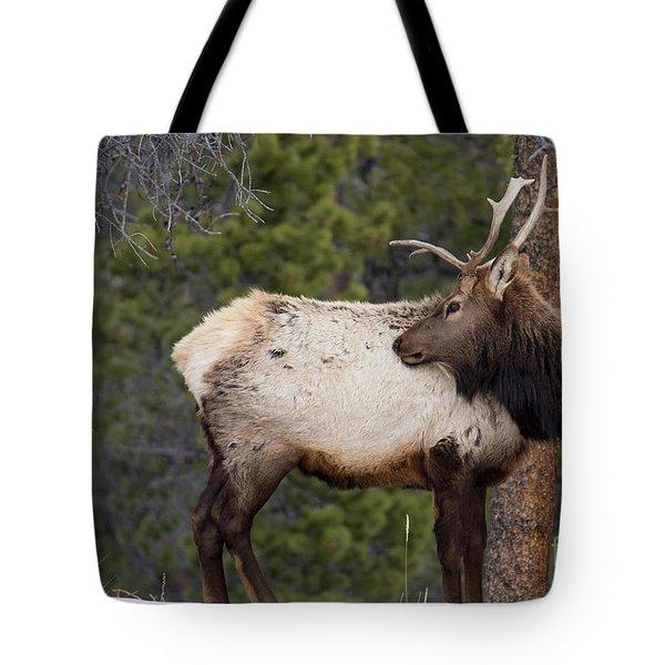 Elk Looking Back Tote Bag