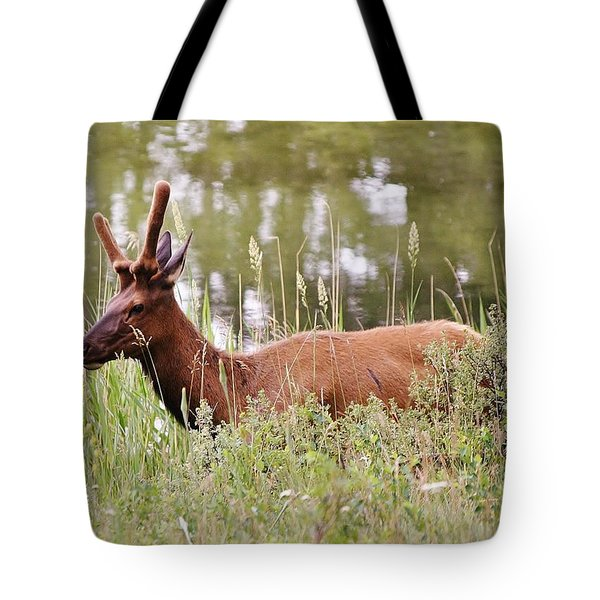 Elk Of Jasper... Tote Bag