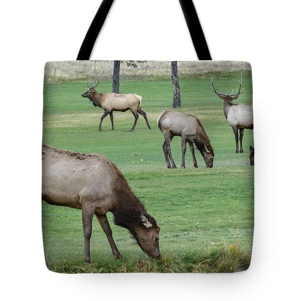 Elk On Golf Course Estes Park Colorado Tote Bag