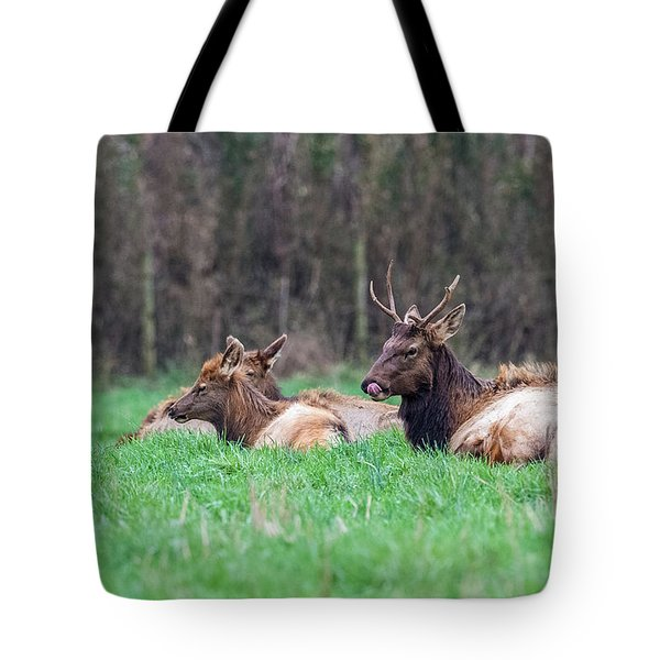 Tote Bag featuring the photograph Elk Relaxing by Paul Freidlund