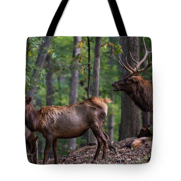 Elk Romance Tote Bag