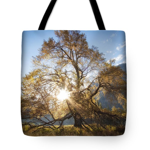 Elm Tree  Tote Bag