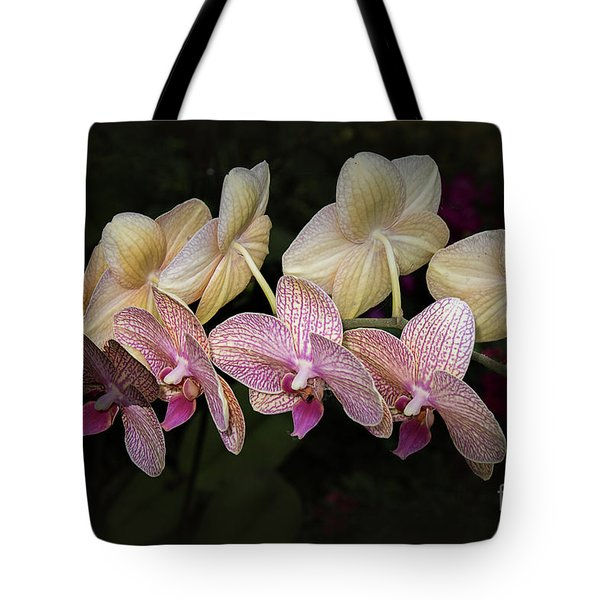 Tote Bag featuring the photograph Eloise by Elaine Teague
