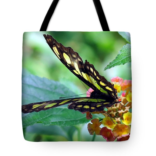 Elusive Butterfly Tote Bag