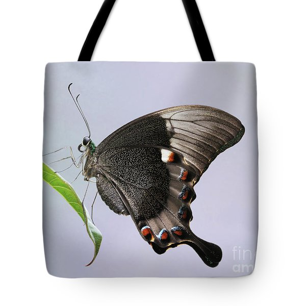 Emerald Peacock Swallowtail Butterfly V2 Tote Bag