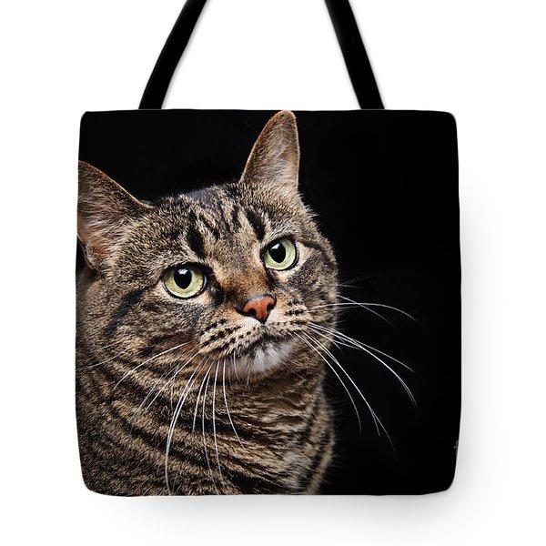 Emmy The Cat Ponder Tote Bag