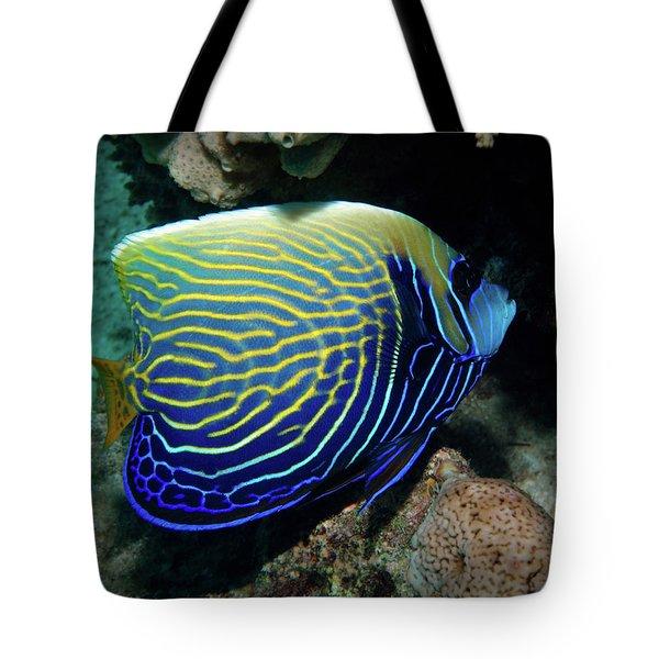 Emperor Angelfish, Red Sea 1 Tote Bag