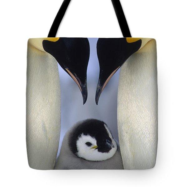 Emperor Penguin Family Tote Bag