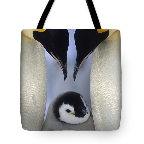 Tote Bag featuring the photograph Emperor Penguin Family by Tui De Roy