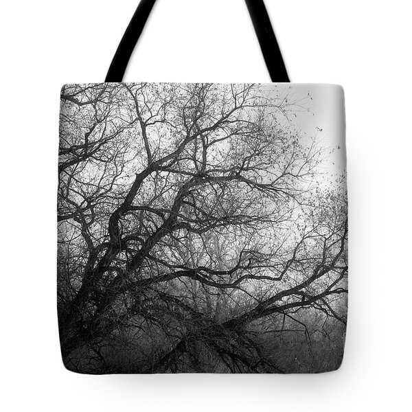 Tote Bag featuring the photograph Enchanted Forest by Ana V Ramirez