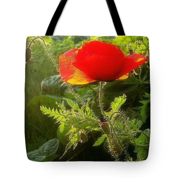 Red Poppy At Sunset Tote Bag