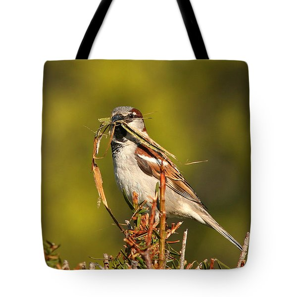 Tote Bag featuring the photograph English Sparrow Bringing Material To Build Nest by Max Allen