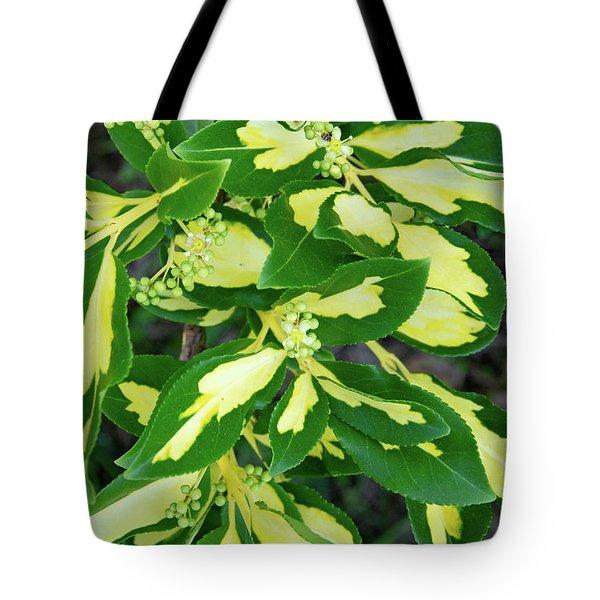Euonymus Blondy Shrub 2 Tote Bag