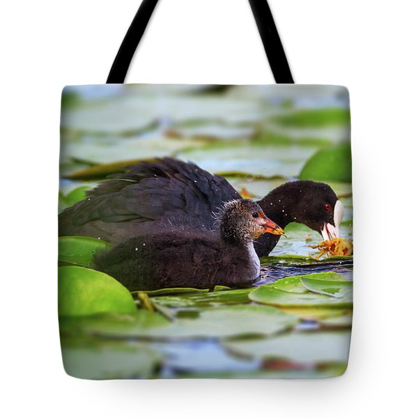 Eurasian Or Common Coot, Fulicula Atra, Duck And Duckling Tote Bag by Elenarts - Elena Duvernay photo
