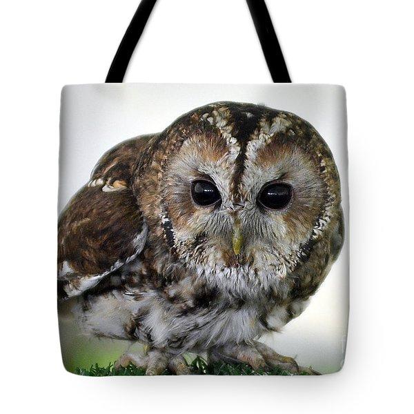 Eurasian Tawny Owl Tote Bag