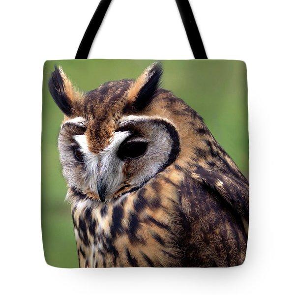 Eurasian Striped  Owl Tote Bag by Stephen Melia
