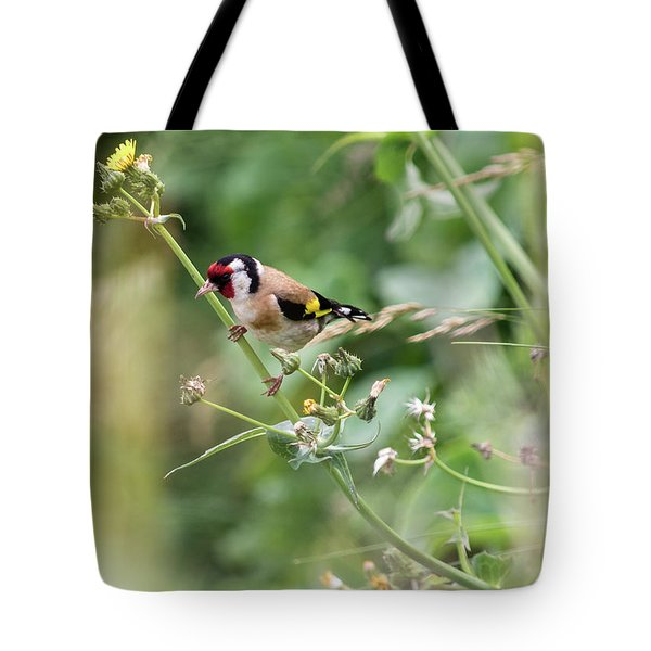European Goldfinch Perched On Flower Stem B Tote Bag