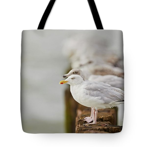 European Herring Gulls In A Row Fading In The Background Tote Bag