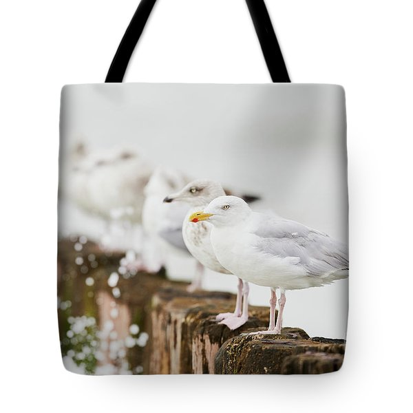 European Herring Gulls In A Row  Tote Bag