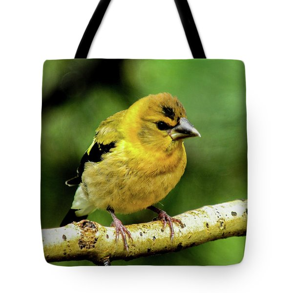 Evening Grosbeak Baby Tote Bag
