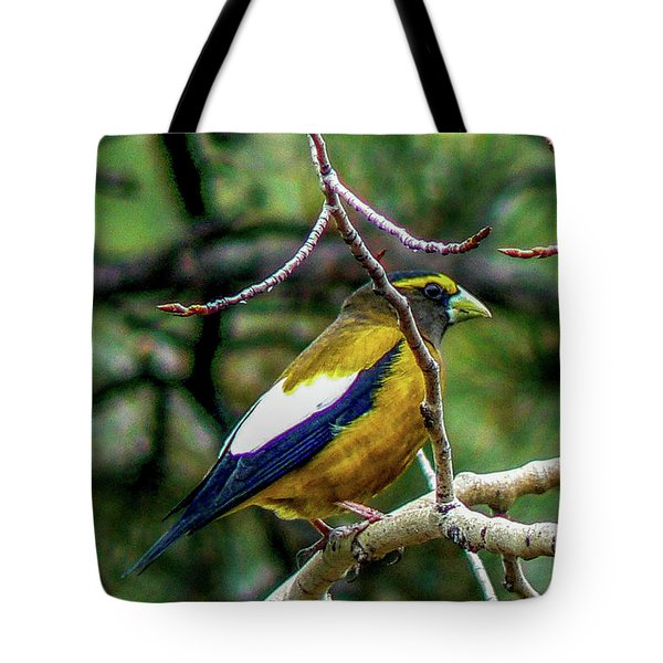 Evening Grosbeak On Aspen Tote Bag