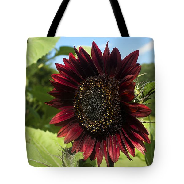 Evening Sun Sunflower #1 Tote Bag by Jeff Severson