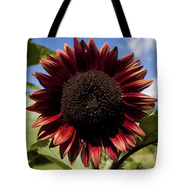 Evening Sun Sunflower #2 Tote Bag by Jeff Severson