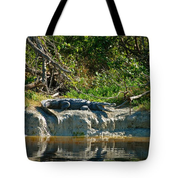Everglades Crocodile Tote Bag by David Lee Thompson