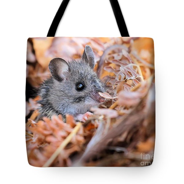 Evicted To The Wilds Tote Bag