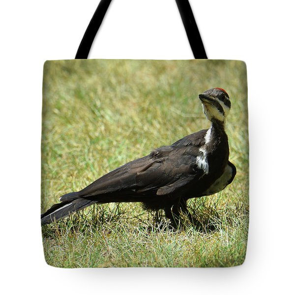 Tote Bag featuring the photograph Excuse Me by Sally Sperry