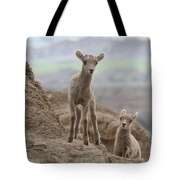Explorations Of Youth Tote Bag