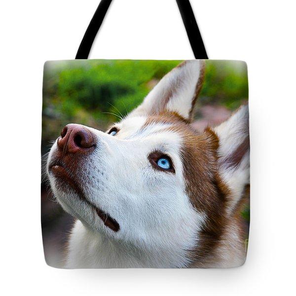Expressive Siberian  Husky Photo C62017 Tote Bag