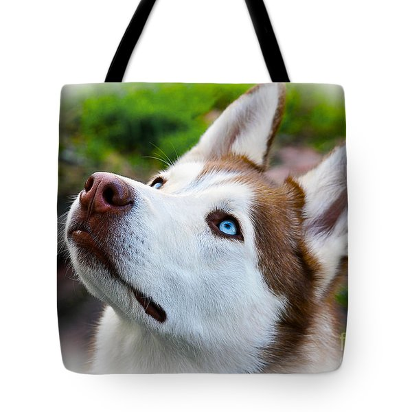 Expressive Siberian  Husky Photo C62017 Tote Bag