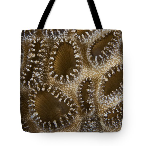 Extreme Close-up Of A Crust Anemone Tote Bag by Terry Moore