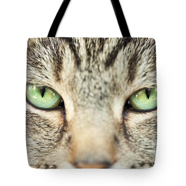 Extreme Close Up Tabby Cat Tote Bag by Sharon Dominick
