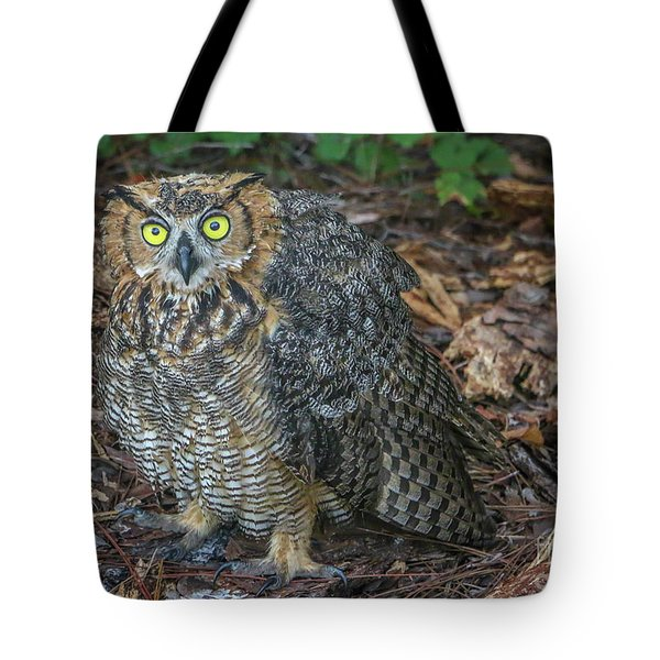 Eye To Eye With Owl Tote Bag
