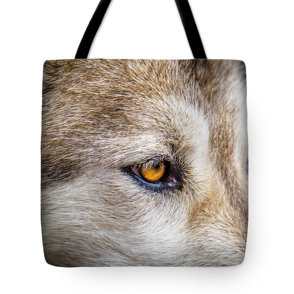 Tote Bag featuring the photograph Eyes Of The Gray Wolf by Teri Virbickis