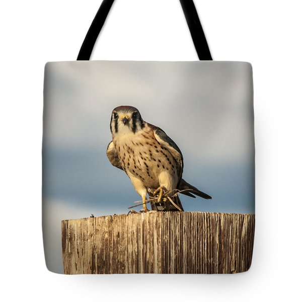 Faa American Kestrel Tote Bag by Daniel Hebard