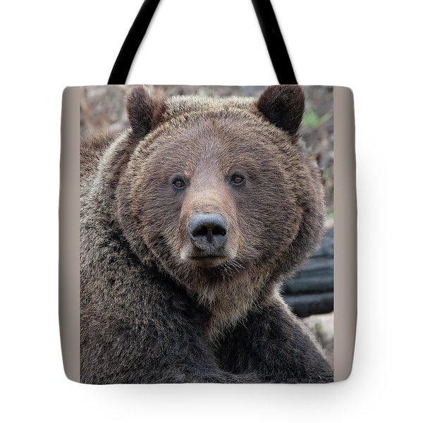 Face Of The Grizzly Tote Bag